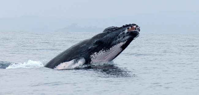 Panama City Beach Whales
