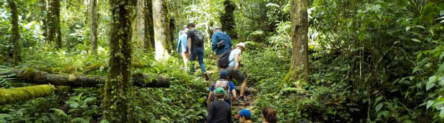 Boquete Cloud Forest Hike + Gulf of Chiriqui Snorkel