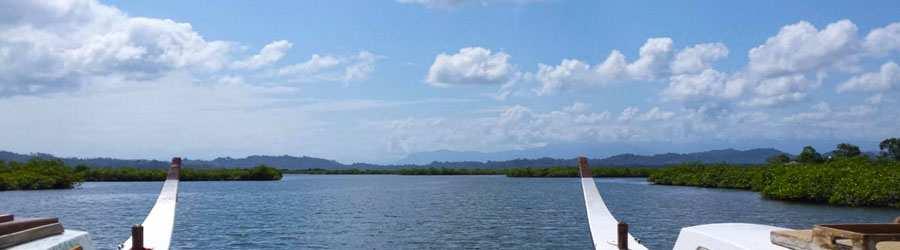 Dolphin Bay Catamaran Tour Bocas Del Toro Tours Panama