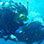 Open Water Diver Full Scuba Certification