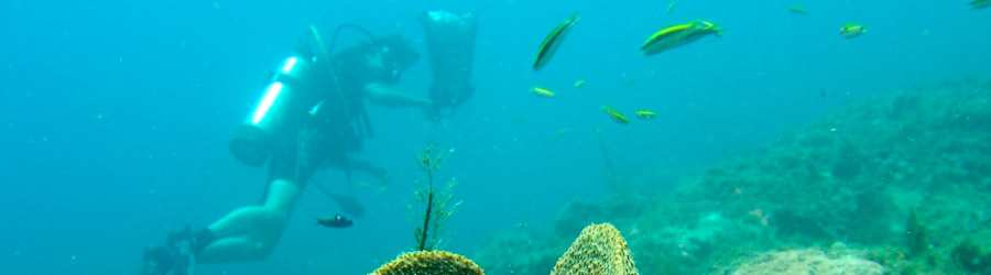 Tiger Rock Scuba Diving - Full Day Excursion