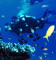 Caribbean Scuba & Private Island